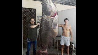 World's Biggest Grouper Ever Caught