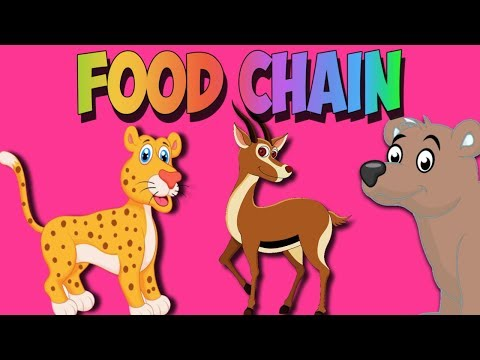 Food Chain Song