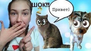 ШОК!!Животные РЕАЛЬНО умеют ГОВОРИТЬ!!Нужна ПОМОЩЬ!!!|ЖИВОТНЫЕ НАУЧИЛИСЬ ГОВОРИТЬ 2!