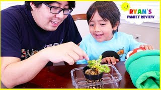 Feeding our new Pet Venus Fly Trap Plant!