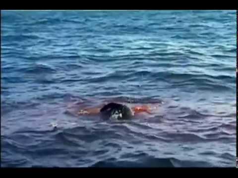 Tubarão Branco uma máquina de matar Completo e Dublado