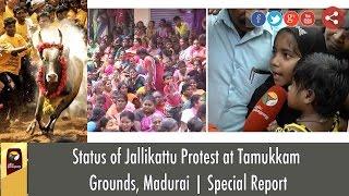 Status of Jallikattu Protest at Tamukkam Grounds, Madurai | Special Report