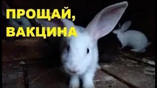 Разведение кроликов. Вакцина для кроликов. Кролиководство без миксоматоза и ВГБК.