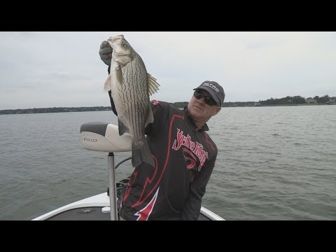 Fox Sports Outdoors SOUTHWEST #15 - 2014 Cedar Creek Lake Hybrid Striper Fishing