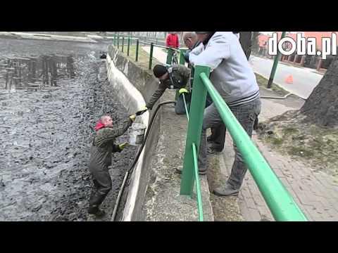 Odłów ryb w Parku Miejskim w Bielawie