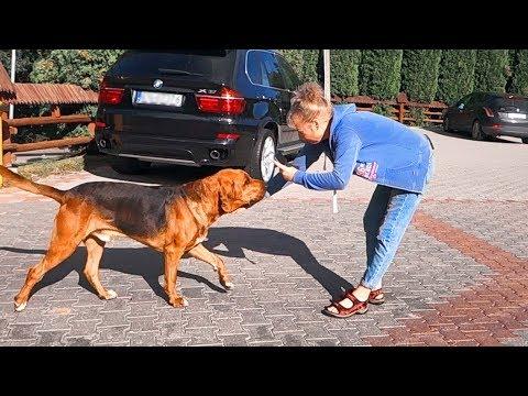 Как мы НАШЛИ СОБАКУ в Польше. Разрешите познакомиться! How we found a dog in Poland.