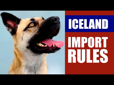 IMPORTING A DOG TO ICELAND Step by Step Guide