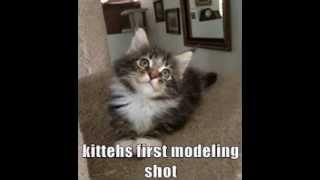 cute kitten meme's :)