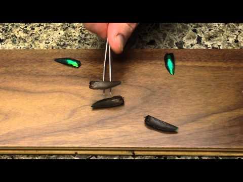 Hovering Elytra - Grebennikov Video Replication Series
