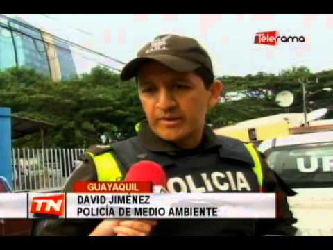 Policía de medioambiente rescato a lechuza herida