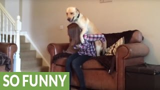Incredibly lazy dog receives piggyback ride up stairs