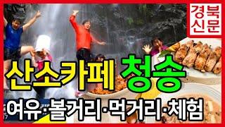 산소카페청송 청송군청 윤경희군수 송소고택 주왕산유네스코…
