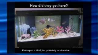 Dr. Zack Jud 06/11/14  Lionfish in Florida: The New Normal?