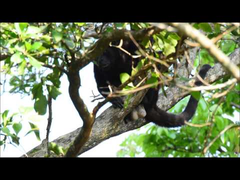 Wildlife in Tela, Honduras