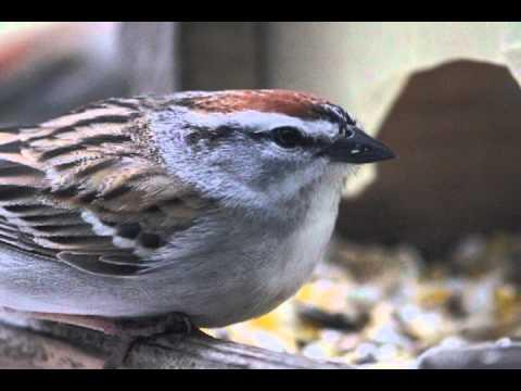 master intro to Birds of WNY final - YouTube