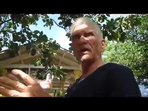 Philip And Beths House And Yard Is Amazing Philippine Expat Foreigner