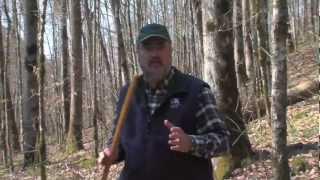 TREE HEIGHT MEASUREMENT