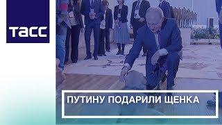 Путину подарили щенка