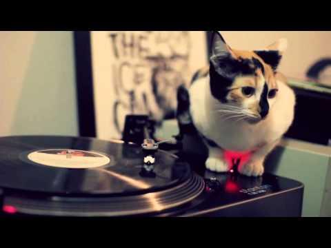 Thumbnail for Cat Video DJ Cat