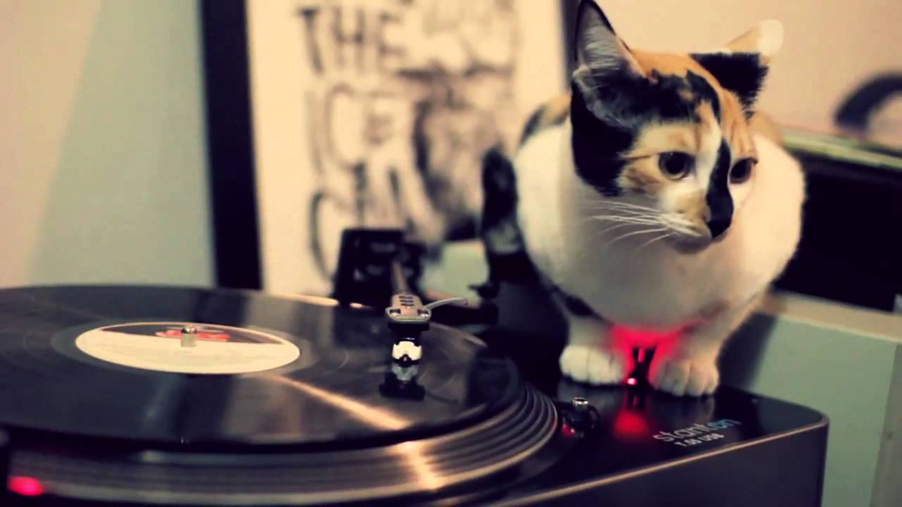Dj Cat Youtube