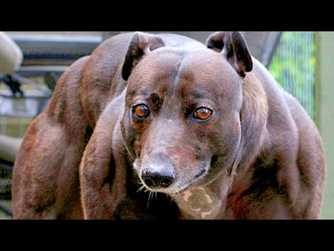 10 Most Unusual Pets Ever