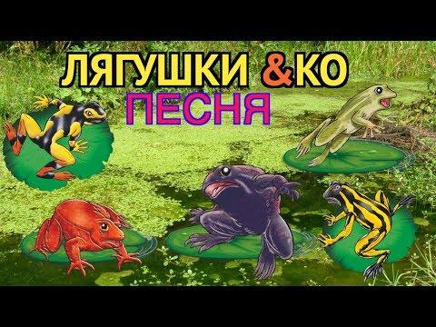 клип лягушек