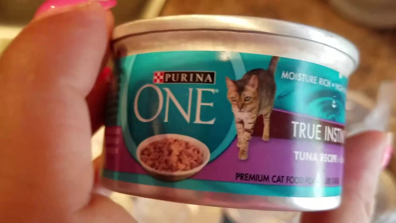 ✅ How To Use Purina One Chicken and Turkey Cat Food Review