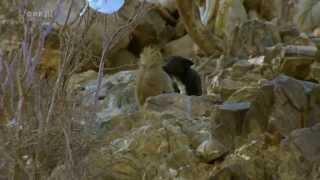 Entwicklung im Gange - Wenn Paviane Hunde adoptieren