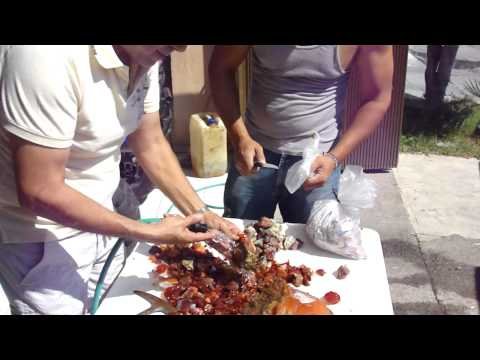 MEXICAN  FIRE OPAL  NEW  PRODUCTION NOV-5-2011 VIDEO 1
