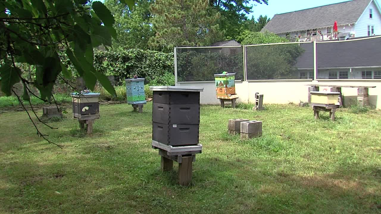are honey bees making a come back in northeast ohio youtube