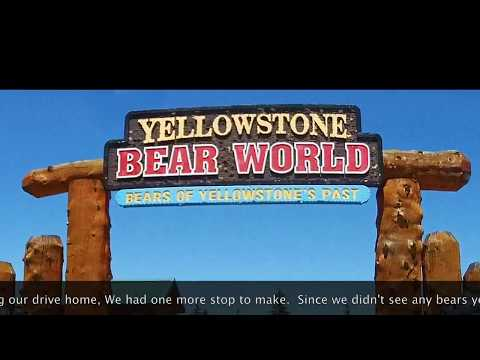 Yellowstone Bear World Part 1