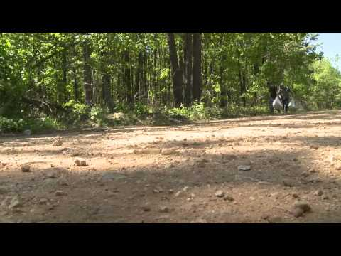 Hero for a Day 2012: Rehabilitating Ozark National Forest