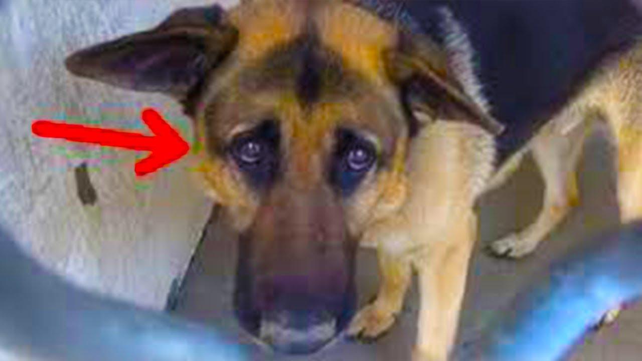 وضعوا كلب عجوز في مأوى الكلاب ، لكن عندما خرج من قفصه شاهد ماذا فعل