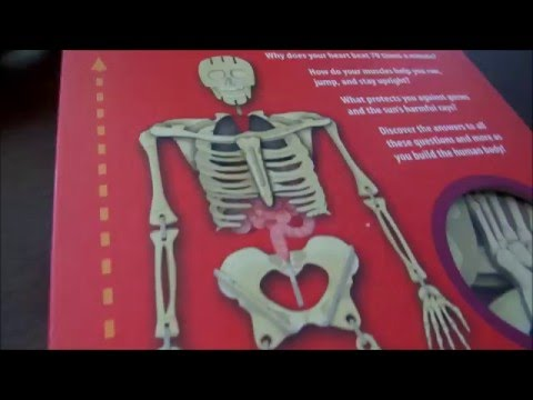 Build The Human Body (Build It) Book Review || Build 2 1/2 Foot 3D Skeleton (Kids Activity)