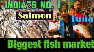 Tuna Fish market | biggest fish market in India | Delhi | all type of fishes