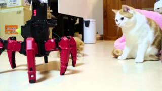 Кошки и роботы. NEW 2015!!!