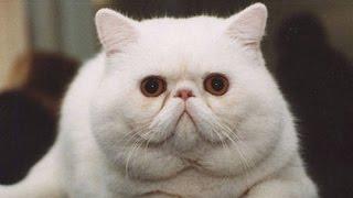 САМЫЕ КРАСИВЫЕ КОТИКИ В МИРЕ THE MOST BEAUTIFUL CATS IN THE WORLD