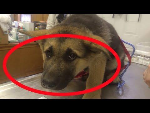 Este Perro Pasa Las Noches En Vela Gracias a Su Ex Dueño