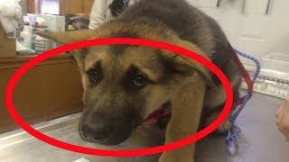 Lo Que Este Perro Hace Cada Noche Mientras Todos Duermen Es Abrumador thumbnail