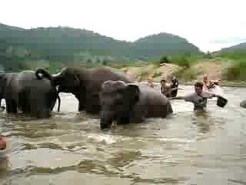 Lauren washing the elephants