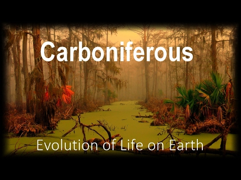 The Evolution of Life part 6 : Carboniferous