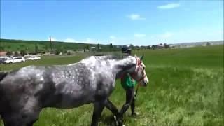 «Восходящая звездочка Терского» и конные пробеги на Кубок России