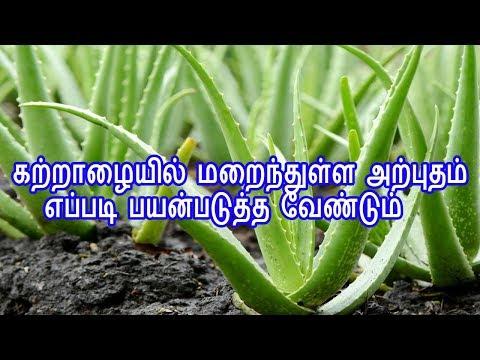 Tamil Tamil Nattu Tamil Nattu Maruthuvam Tamil Siddha Maruthuvam Tamil Natural Medicine Siddha