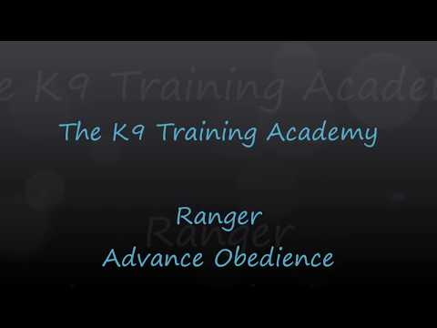 Ranger - Advance Obedience - The K9 Training Academy