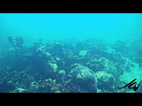 WARNING THIMBLE JELLYFISH - SEA LICE At RIVIERA MAYA  - YouTube HD