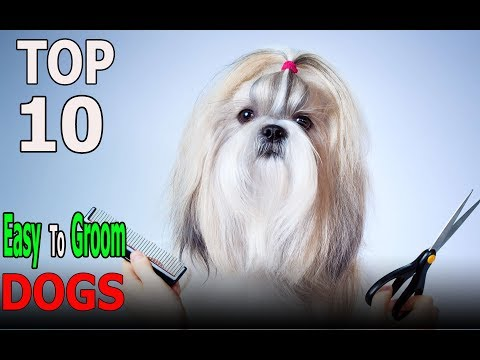 Top 10 Dog Breeds That Are Easy To Groom | Top 10 animals
