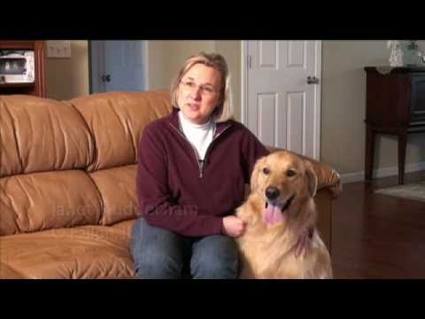 hills-dog-transformation-video---brinkley