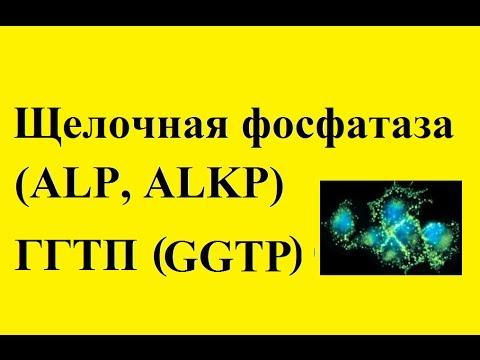 Анализ крови щелочная фосфатаза: что это такое, что