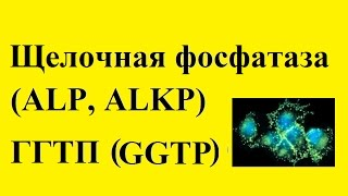 видео АСТ анализ крови