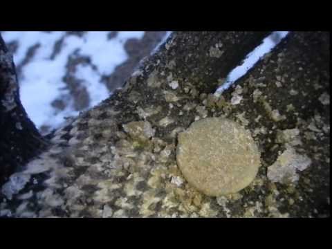 Roman Ring and Big Roman coin Hunt thumbnail
